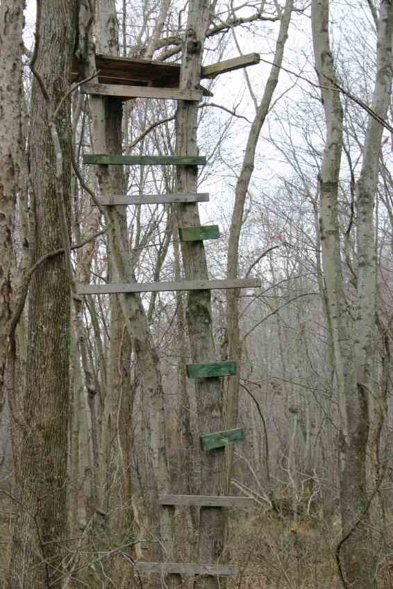 Deer Stand 4